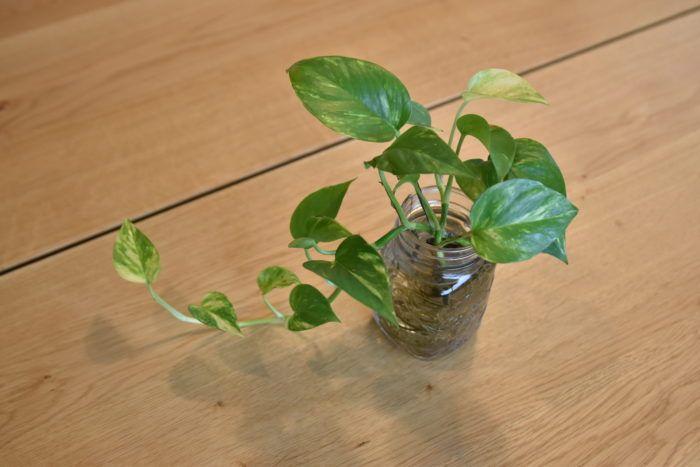 トイレにもグリーンを置きたい 8つのオススメ観葉植物 熱帯植物