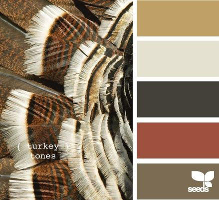 Turkey Tones? This is the color of my bedroom, so does this make me a Turkey or my husband? LOL