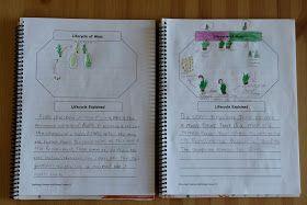 Delightful Learning: Seedless Vascular Plants, Nonvascular Plants & Nature Journaling