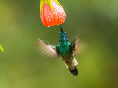 Avec les beaux jours qui reviennent les oiseaux font leur retour dans les forêts. L'un des nombreux émerveillements du Printemps. Photo : Luigi Rotondaro / #olympusomd E-M1 MarkII / #myolympushttp://ift.tt/2nx5Ah8 via Olympus on Instagram - #photographer #photography #photo #instapic #instagram #photofreak #photolover #nikon #canon #leica #hasselblad #polaroid #shutterbug #camera #dslr #visualarts #inspiration #artistic #creative #creativity