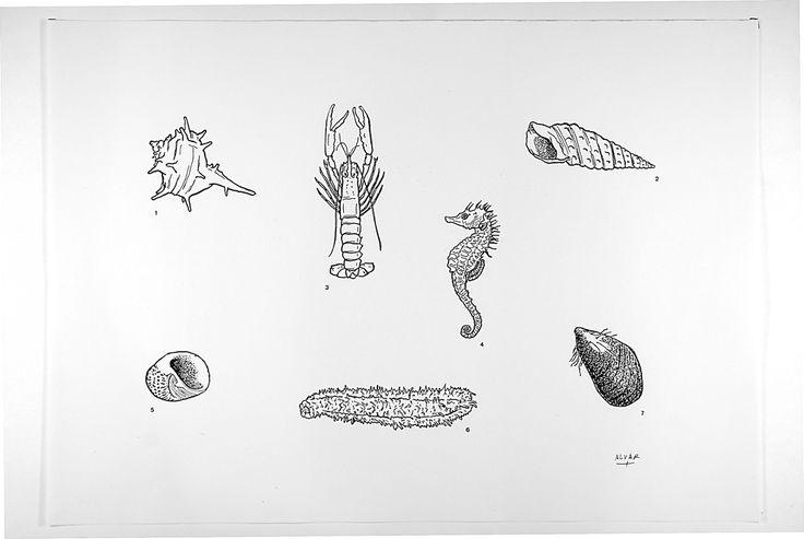 Cañadilla, pada, cigala, caballito de mar, natica, holoturia, mejillón. Andalucía.