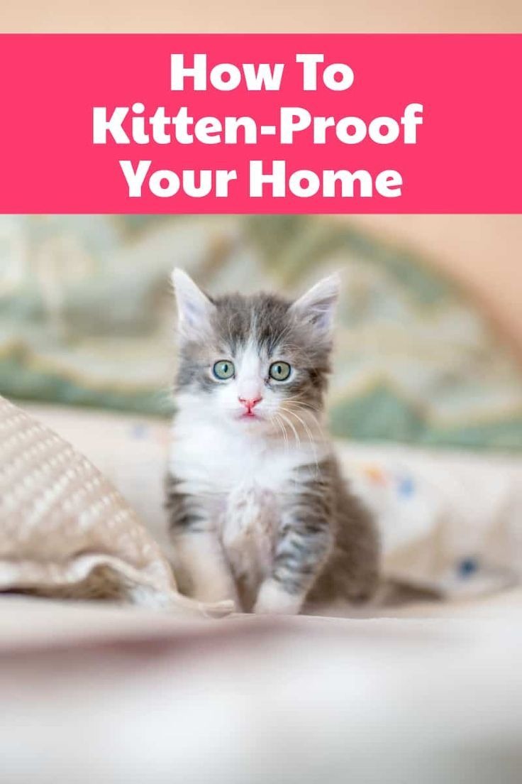 Want To Learn How To Kitten Proof Your Home Use These Tips And You Ll Keep Your Home And Your New Furry Friend Safe Kitten Proofing Cat Care Cat Training