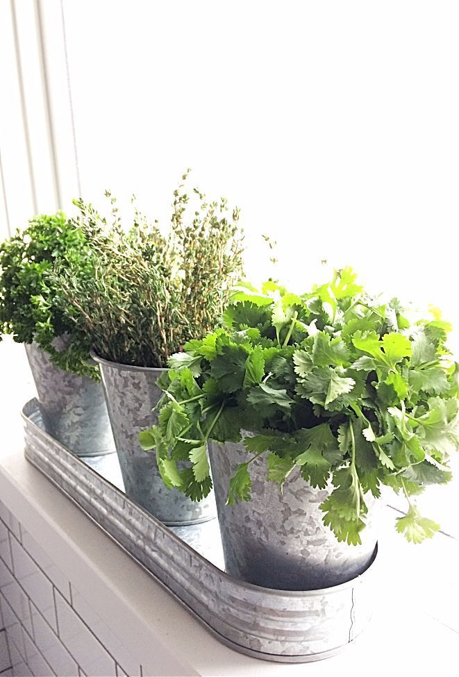 What A Cute Windowsill Herb Garden You Can Make Your Own Diy One