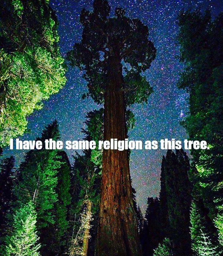 I have the same religion as the trees