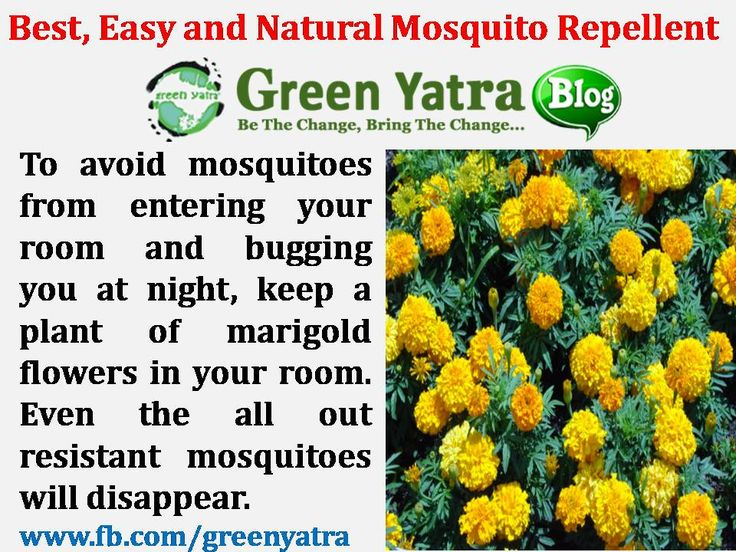 Mosquito Repellent Getting Rid Of Bugs Mosquito Repelling Plants