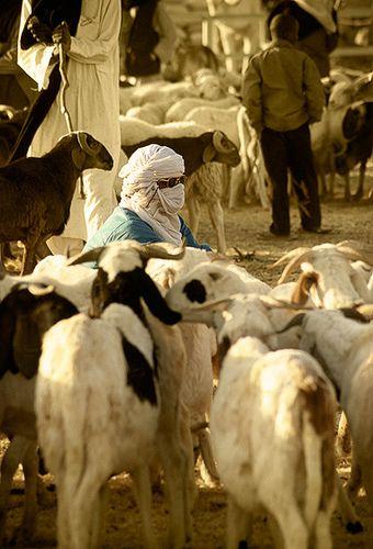 Venta de cabras en el mercado de ganado de Agadez -   Sale of goats in the livestock market in Agadez (December 2006)    www.vicentemendez.com