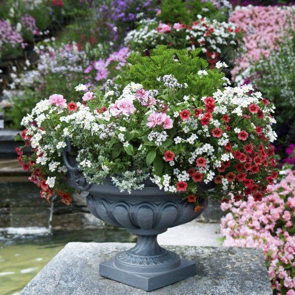 Les 16 meilleures images propos de fleurs annuelles du for A propos du jardin