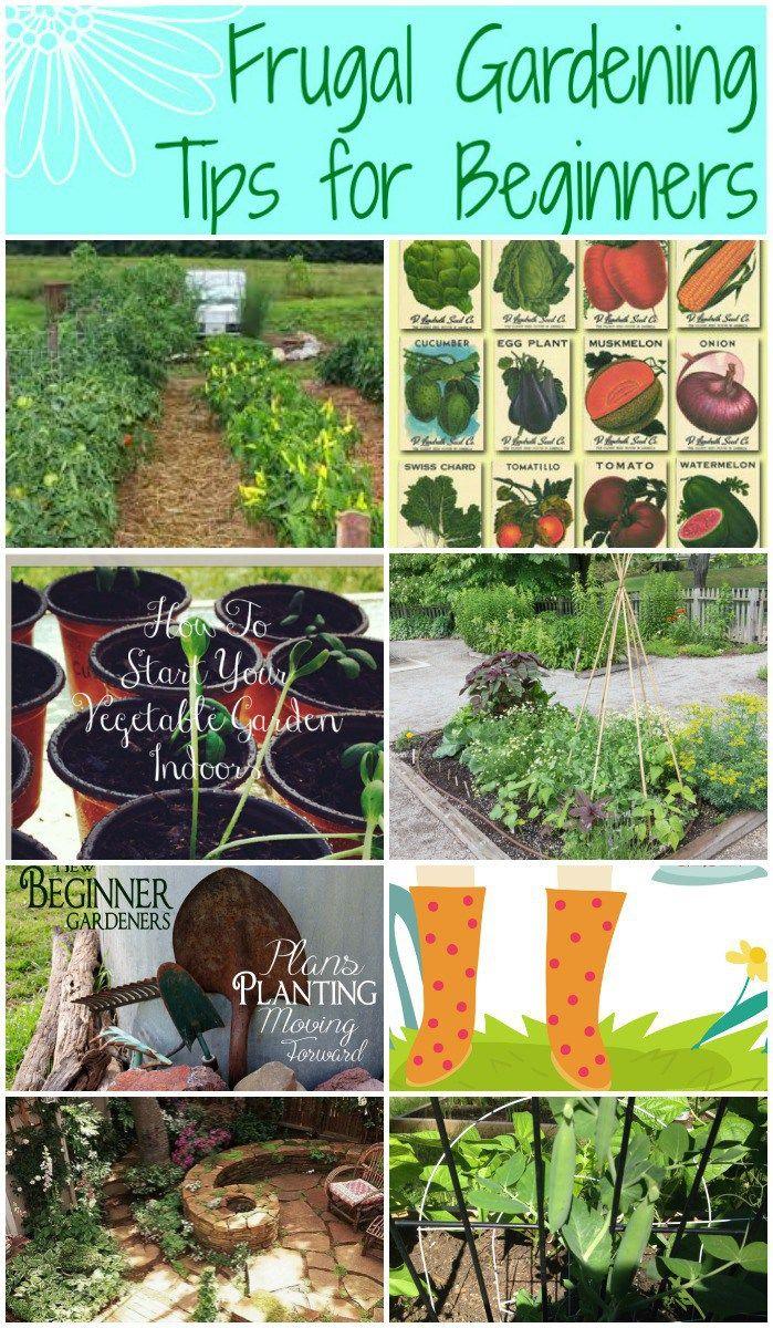 1295 best garden tips tricks images on pinterest for Indoor gardening for dummies