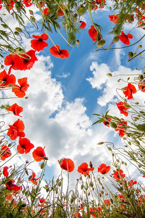 赤い花を植えると空とのコントラストがいい感じ
