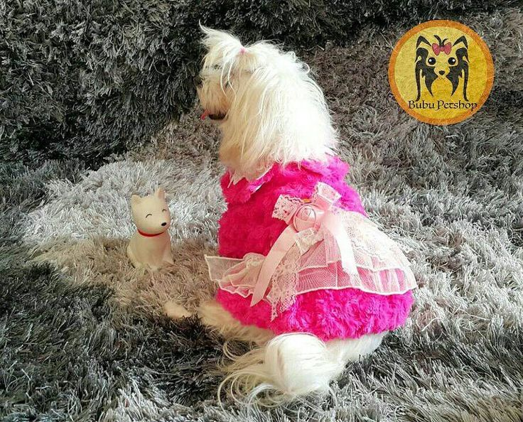 Mau cari perlengkapan anjing seperti baju collar harness mainan dll yg bagus lucu dan stylish? Udah cari dimana2 tapi mahal?  Yuk buruan follow  @bubupetshop @bubupetshop @bubupetshop  First Hand Pet Stuffs Suplier!  Di petshop ini barang2nya diiimport dari luar negeri murah tapi bekualitas All Ready Stock! Yukk buruan di order sebelum kehabisan  Harga mulai dari IDR 10k  Order and question: Line: bubupetshop WA: 6285779937226 BBM: 5EB5EA0A  #pet #puppies #anjinglucu #bajuanjing #adidog…