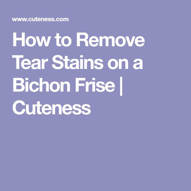 How to Remove Tear Stains on a Bichon Frise | Cuteness