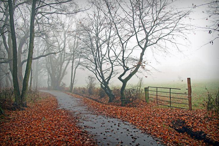 Der Nebel ist die schönste Form der Verschleierung.  Klaus Ender