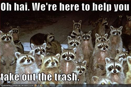 funny raccoons pictures | North American Common Raccoon | The eBestiary