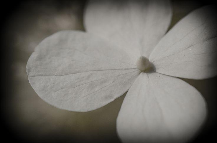 Condoleance- een aandachtskaart met zuivere bloem van fotograaf Hans Lunenburg