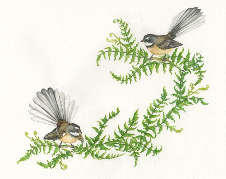 Ferns and Fantails   Watercolour painting by Madison drinkall.