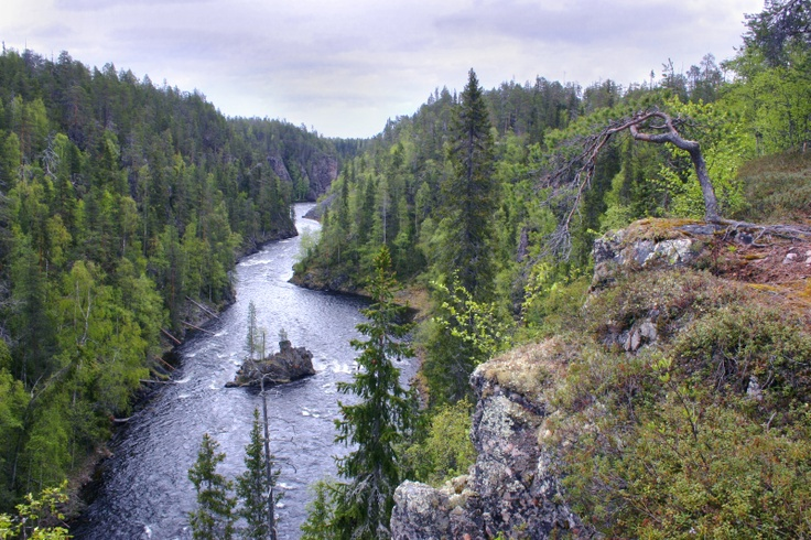 Kalliosaari on Kitka river, in Oulanka National Park, Kuusamo, Finnish Lapland