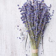 Dried Lavender Bundle - $10.00 Bundles are approximately 150 stems and 13″ length.