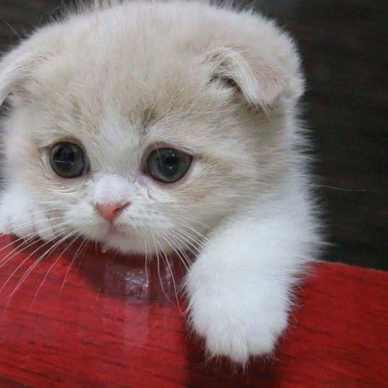 Klicken Sie auf das Foto für mehr bezaubernde und niedliche Katzenvideos und -fotos #cutecats #cats …   – Tierisch – beautiful and soooo cute