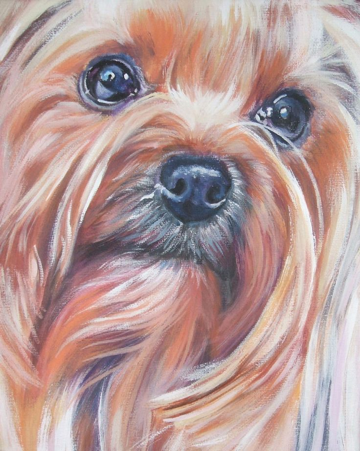 Yorkshire Terrier yorkie art print CANVAS print of LA Shepard painting  8x10 dog art. $19.99, via Etsy.