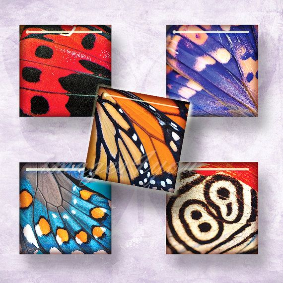 Butterfly Wing 1 square images for pendants 1x1 inch