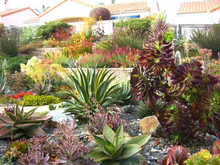 Landscaping With Succulents Ideas : Ideas about succulent landscaping on succulents garden