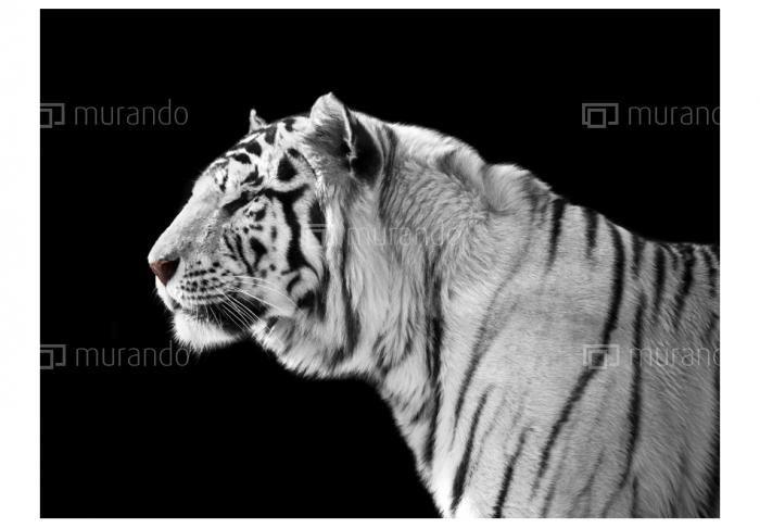#whitetiger #wallpaper #decoration #animals