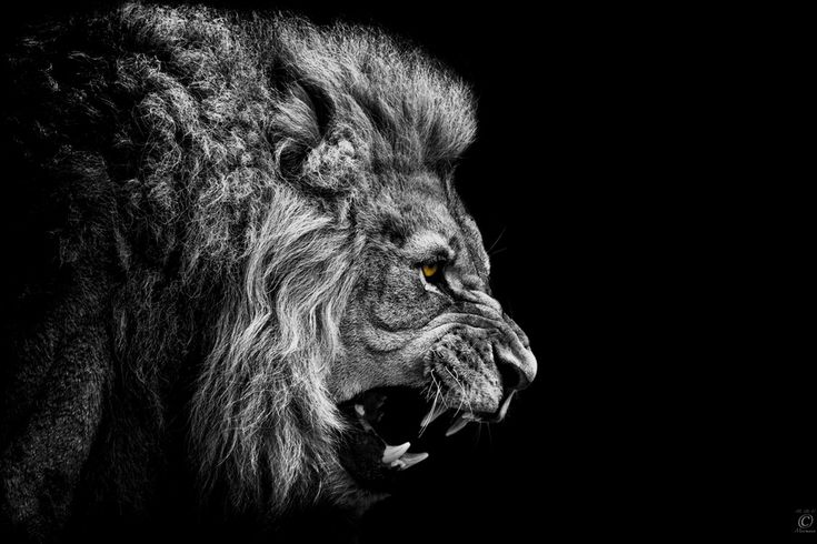 """""""The King Is Angry"""" by Christian Meermann"""