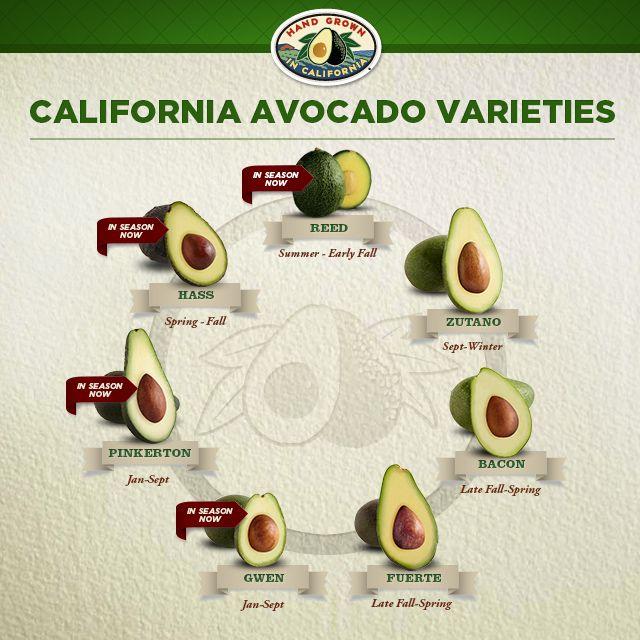 California Avocado varieties by season #infographic