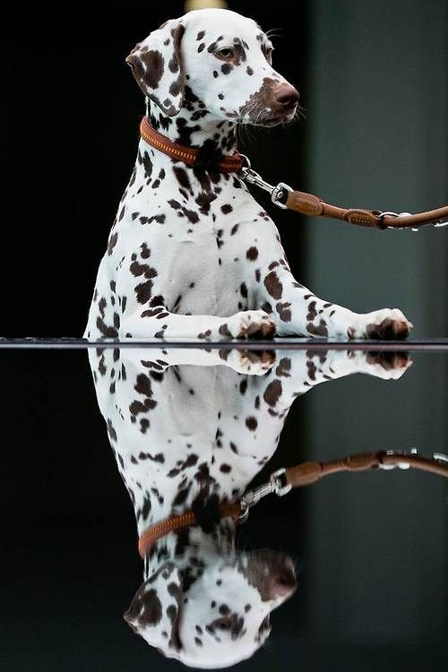 Double Dog. Daniel Karmann / AFP - Getty Images via Animal Tracks