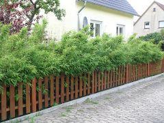 Eine Bambushecke schützt vor neugierigen Blicken.