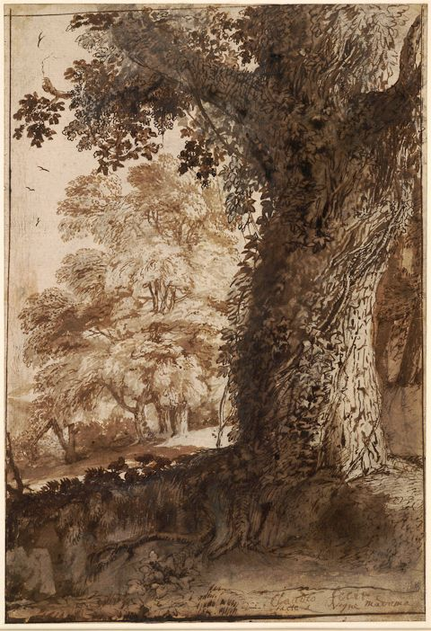 Claude Lorrain - A Study of an Oak Tree, Italy, late AD 1630s, Black chalk, pen and brown ink with gray-brown wash on white paper, British Museum. http://www.britishmuseum.org/explore/highlights/highlights_search_results.aspx?searchText=claude+lorrain