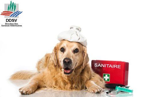 038 DDSV direction départementale des services vétérinaires