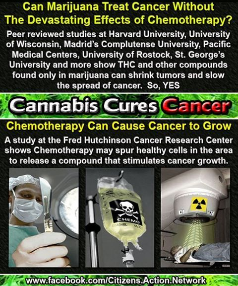 Spanish Study Confirms Cannabis Oil Cures Cancer Without ...