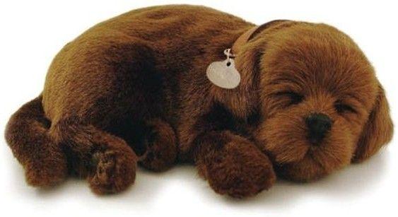 Adopteer je eigen huisdier. De Perfect Petzzz zien eruit als echte huisdieren, door hun zachte vacht en doordat ze lijken te ademen. Ze worden geleverd met een mandje, borstel en certificaat van adoptie. De Perfect Petzzz maken geen geluid en hebben een afmeting van 27 x 17 x 10 cm. Exclusief 1 D batterij. Er zijn verschillende Perfect Petzzz pups en katten verkrijgbaar.   Afmeting: volgt later.. - Perfect Petzzz soft Chocolate Labrador