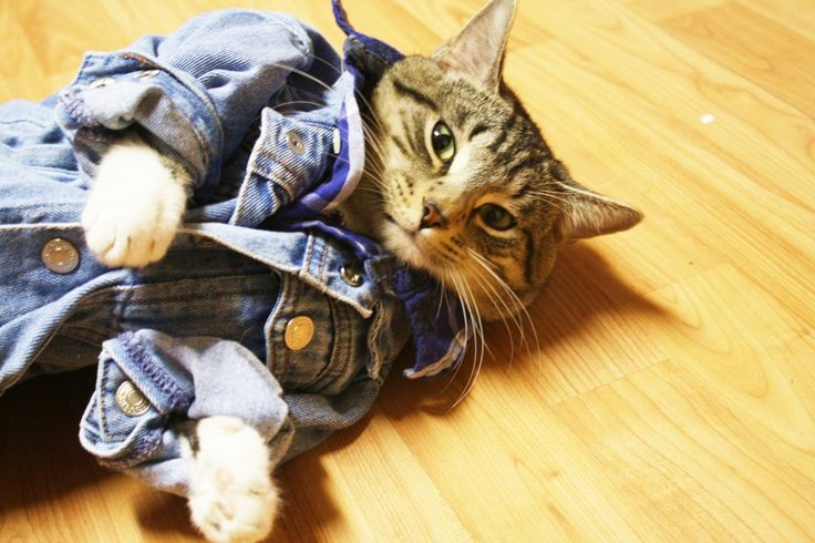 31 Stylish Cats With Wardrobes That Will Make You Jealous