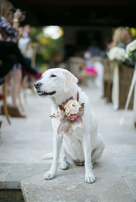 Brides.com: . Draw inspiration from your bouquet and the groom's boutonniere when picking flowers for your pet. This white Lab swears a mix of different pale-hued petals attached to a pink bow.