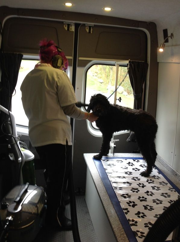 Zoomin Groomin photos of our mobile pet grooming vans. See inside our mobile dog grooming vans.