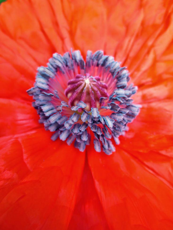 Blommor i min trädgård - YouTube
