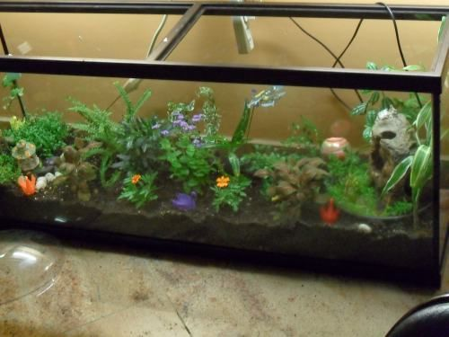 25 best ideas about large terrarium on pinterest water for Fish tank terrarium