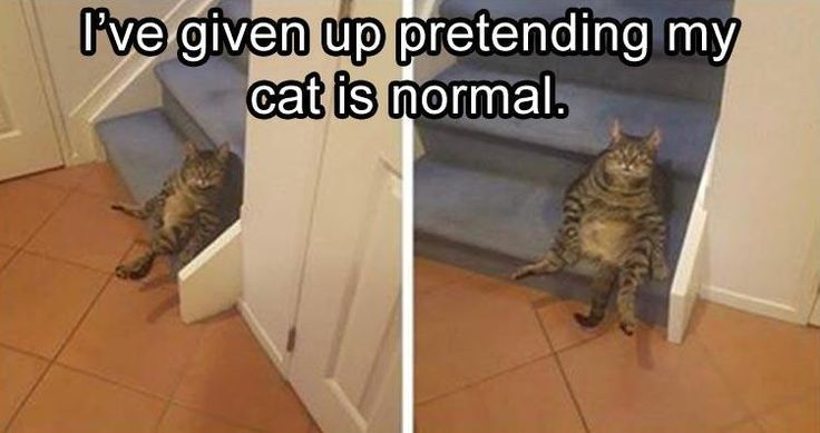 Funny Animal Pictures #9