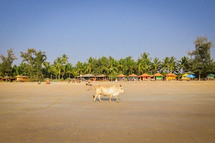 Agonda: The Most Peaceful Beach in Goa