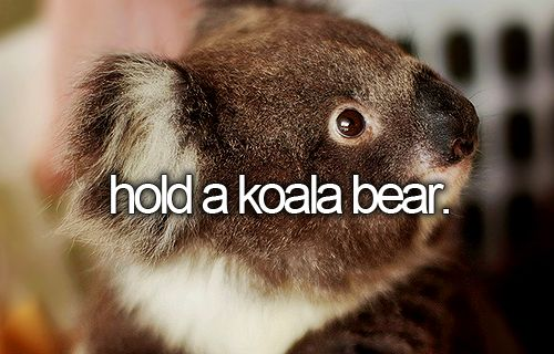 [ ] When I was little I loved koala. I would have freaked because this said the word bear. Anyway, this would be a dream come true!!