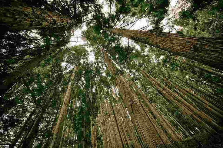Hutan Hujan Tropik Hutan hujan tropis adalah hutan yang basah / lembab dan hangat. Menjadi jutaan jenis, tumbuhan & hewan, bahkan manusia. Hutan ini sangat penting untuk kita, karena salah satu pemasok oksigen untuk Bumi, yang di perlukan untuk bernapas   Hutan hujan tropis juga dikenal sebagai paru-paru dunia. Diperkirakan sekitar 40% produksi oksigen dunia dihasilkan dari tempat