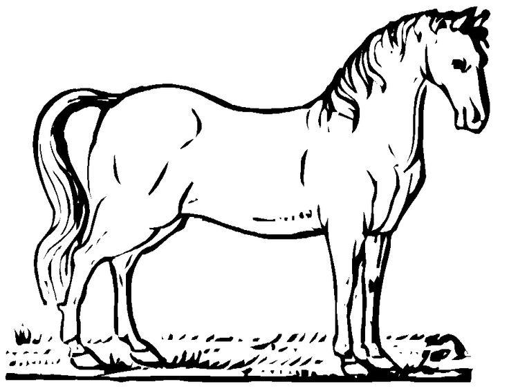 Mejores 65 imágenes de Horses en Pinterest | Páginas para colorear ...