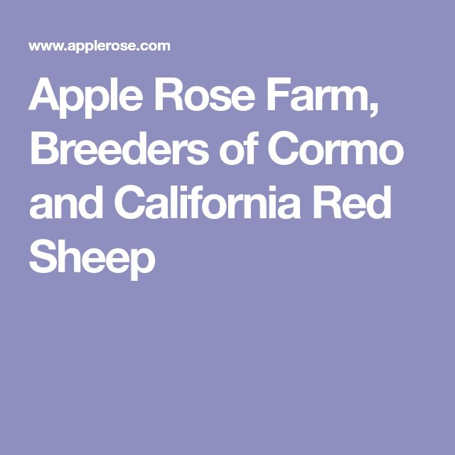 Apple Rose Farm, Breeders of Cormo and California Red Sheep
