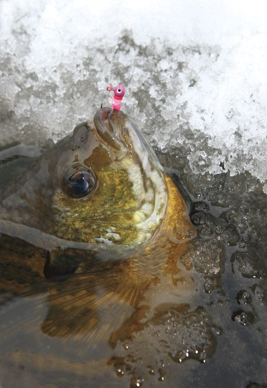 1000 ideas about ice fishing jigs on pinterest fishing for Best ice fishing lures for panfish