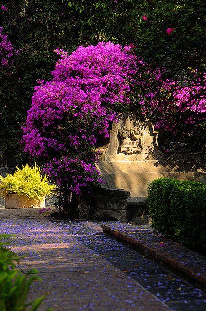 San Angel Mexico Ciudad de México