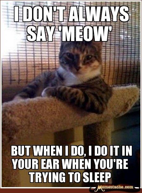 indeed: Cats, Animals, So True, Funny Stuff, Funnies, Humor, Interesting Cat