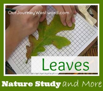 An analysis of the math of nature or math for nature