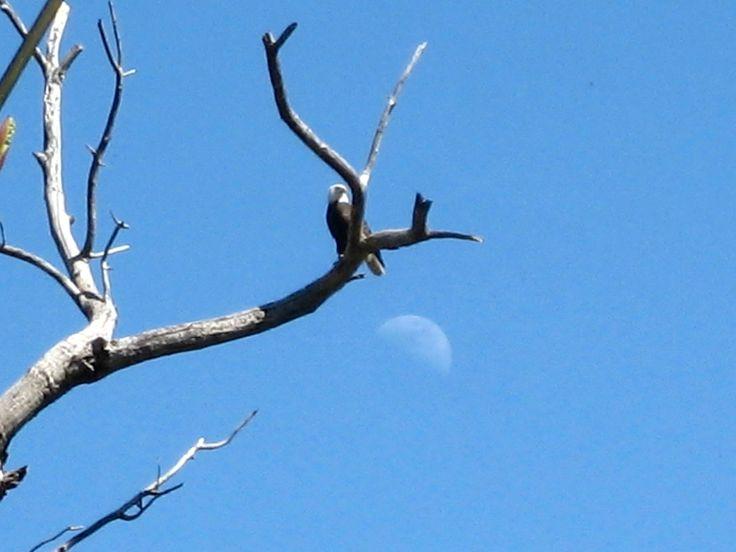 Eagle and moon River Rd Puyallup WA
